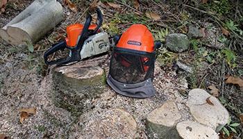 Tree maintenance in Mid Wales